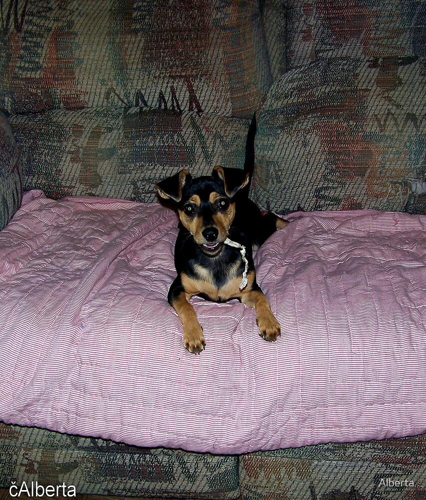 My Puppy Prissy by Alberta