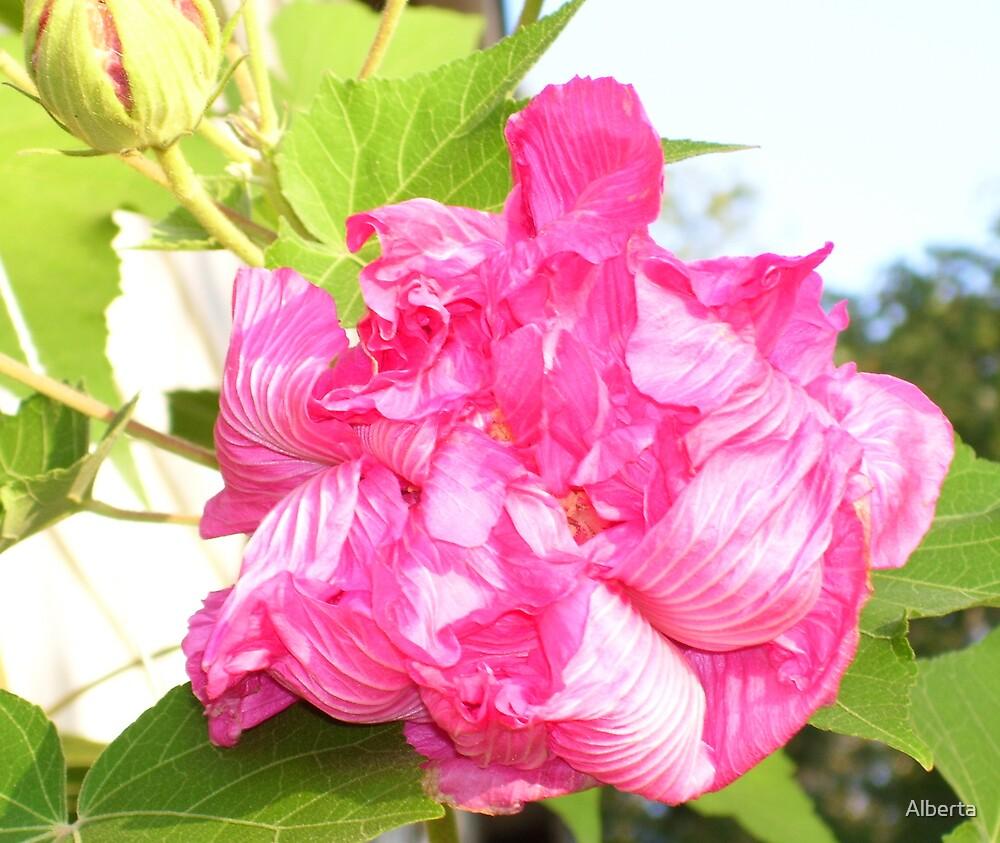 Dark Pink Flower by Alberta