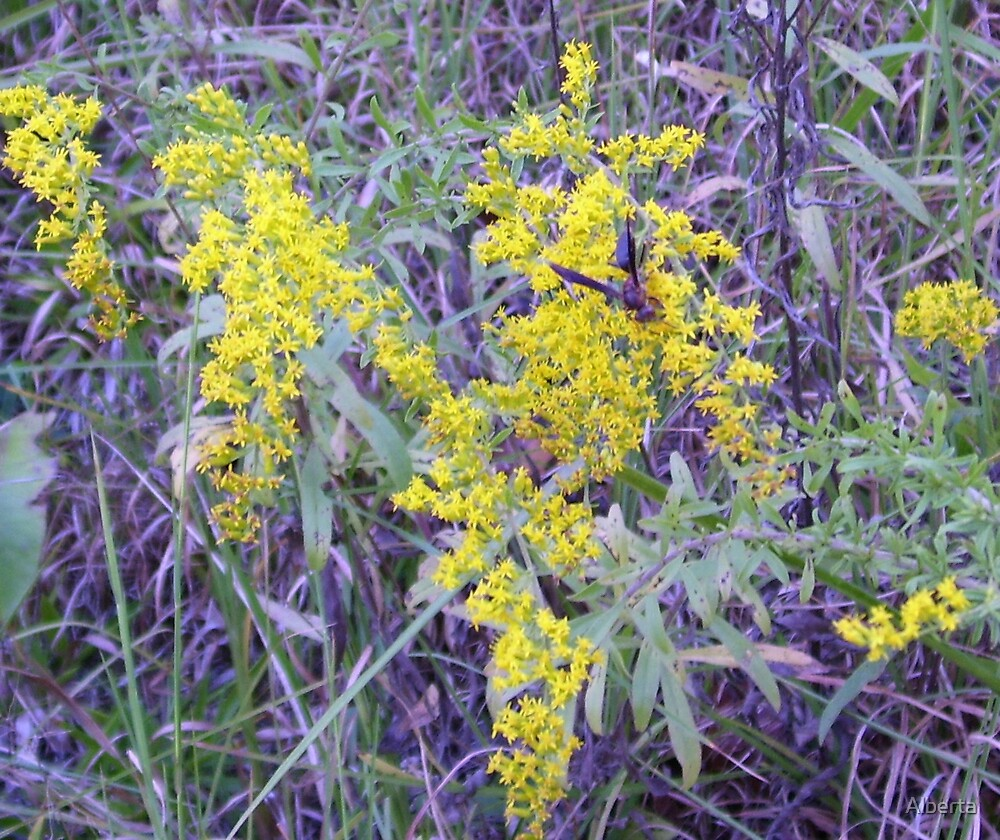 Yellow Flowers With A Wasp On Them by Alberta