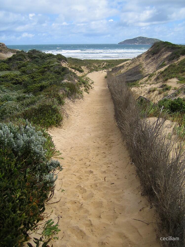 sandy road by ceciliam