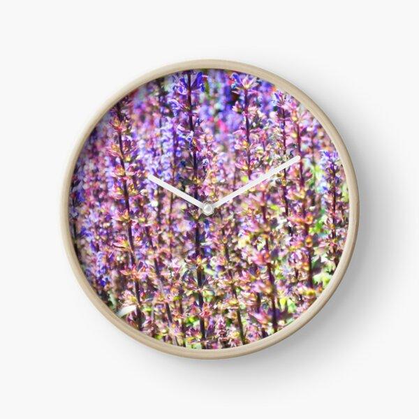 Cardonna Salvia Clock
