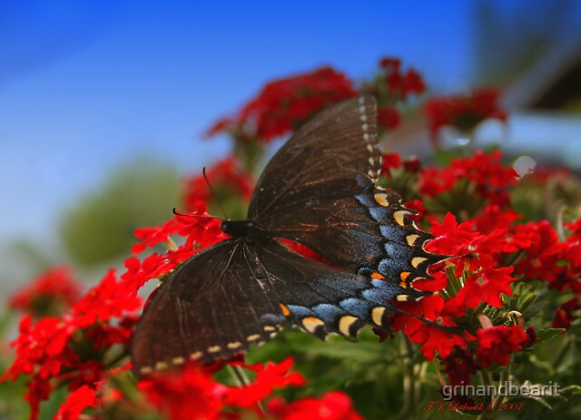 Black Beauty by grinandbearit