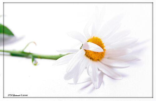 Daisy by grinandbearit