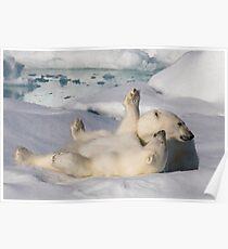 Polar Bear Cubs Poster