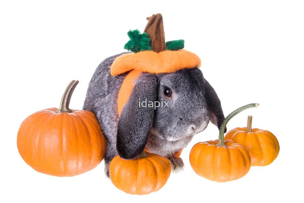 Pumpkin Patch Rabbit by idapix