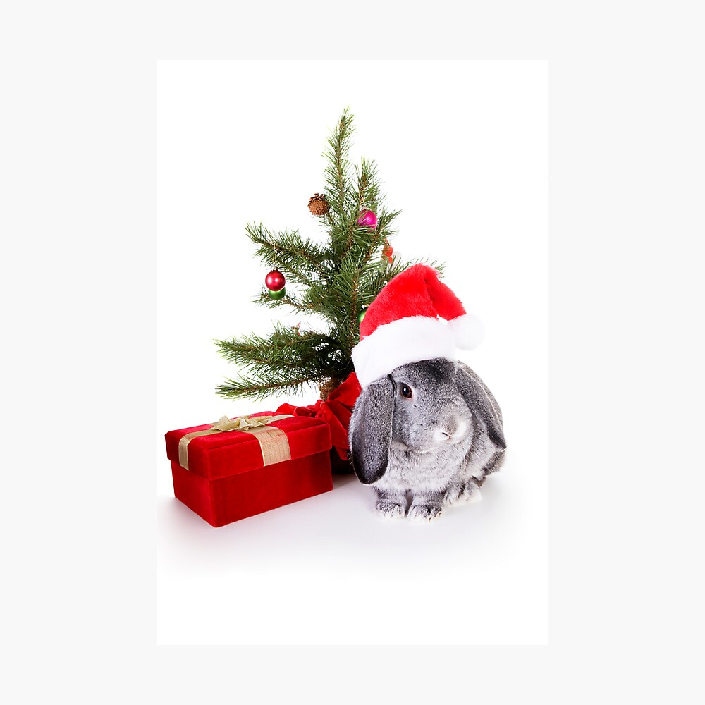 Christmas Rabbit Photographic Print