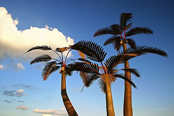 Metal Palm Trees by grinandbearit