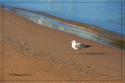 On The Beach by grinandbearit