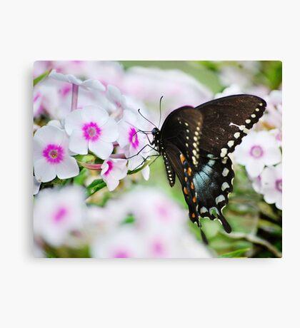 Phlox & Butterfly Canvas Print