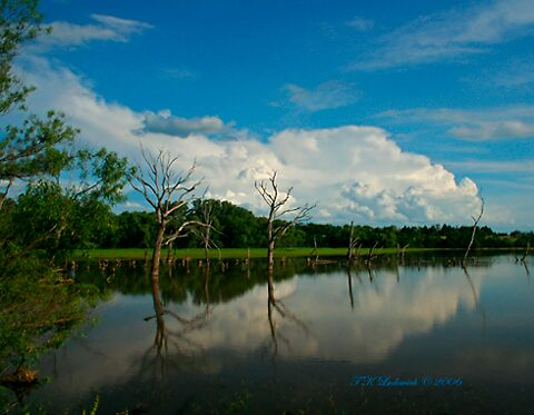 Tree & Cloud reflections by grinandbearit
