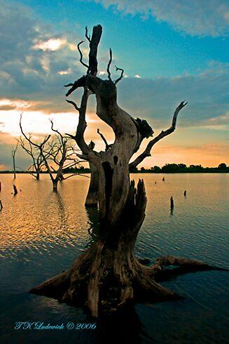 Tree Stump by grinandbearit