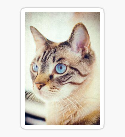 Blue eyed kitty Sticker