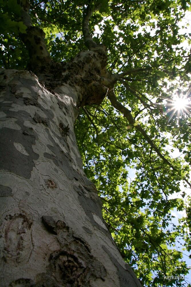 Sun through the leaves by kimwild