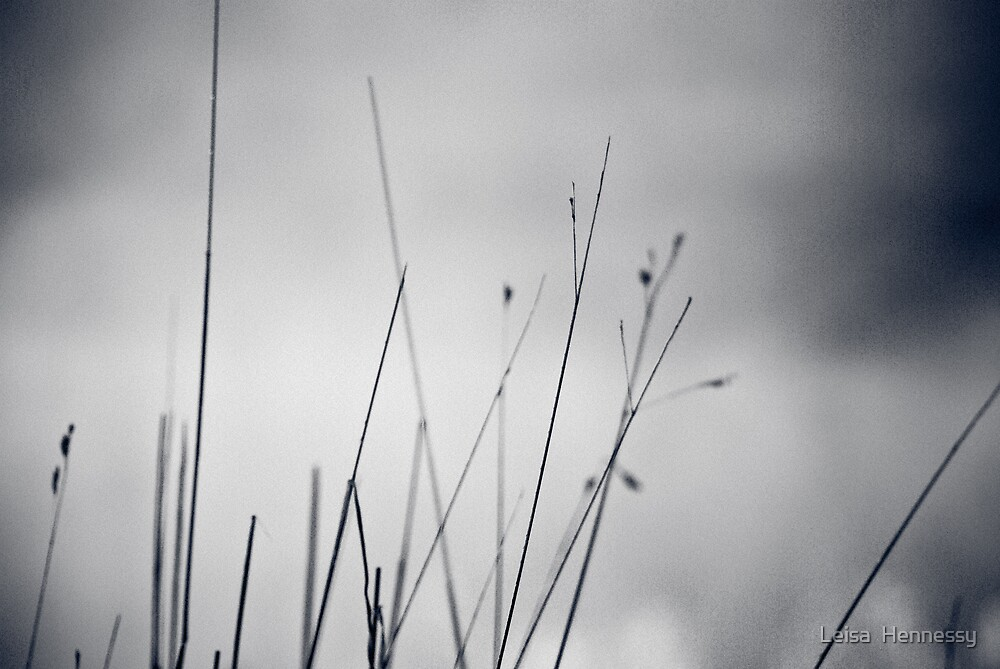 Grasses by Leisa  Hennessy