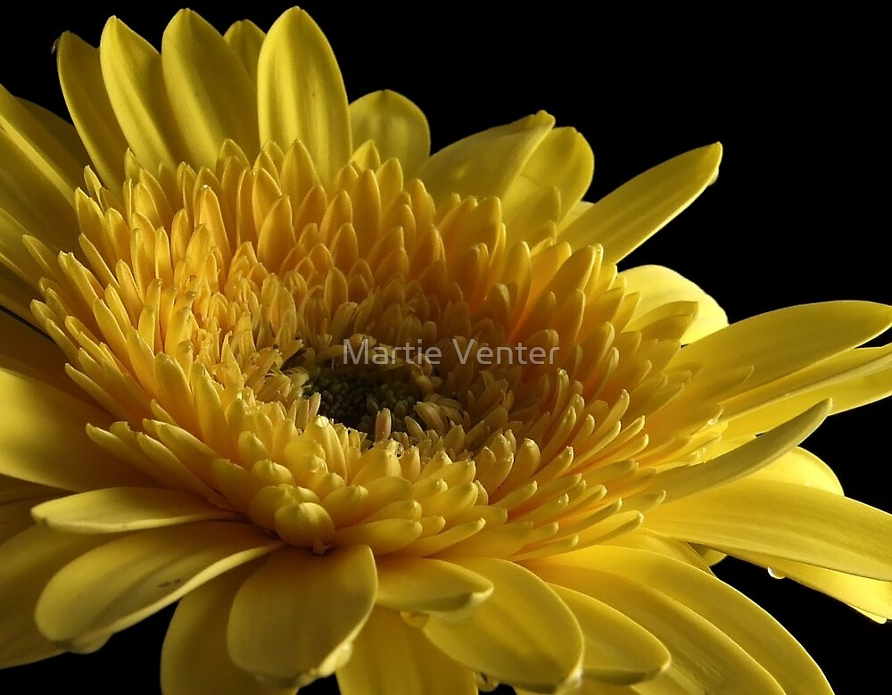 Sunshine by Martie Venter