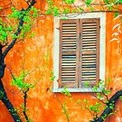 Window with tree branches by Silvia Ganora