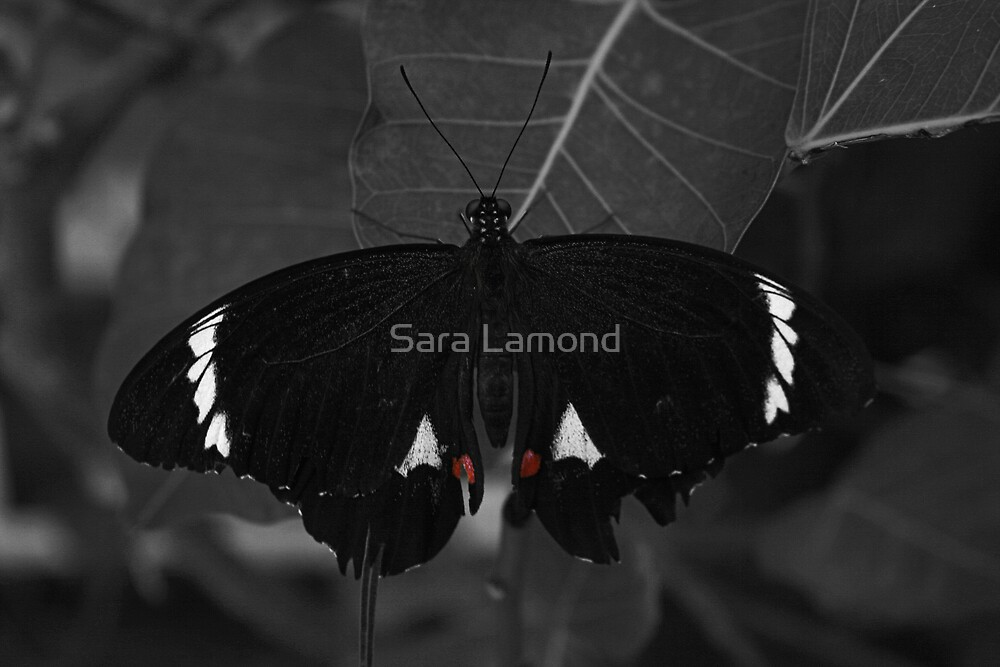 Tattered by Sara Lamond