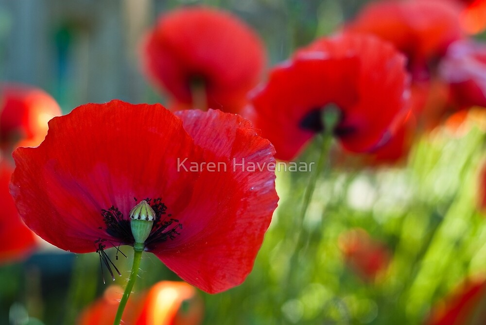 Red all over the Place by Karen Havenaar