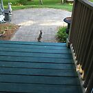 my little rabbit waiting at the steps for his biscuit by little1sandra