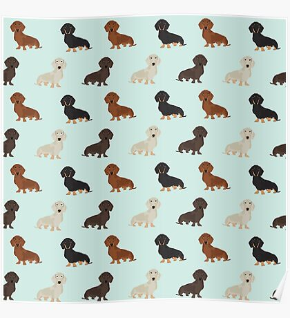 Doxie dachshund dachsie pattern print dog lover dog breed custom dog art by pet friendly by PetFriendly Poster