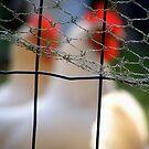 Wire by Bruce  Watson