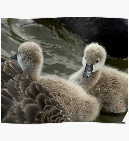 Sibling Signets Poster