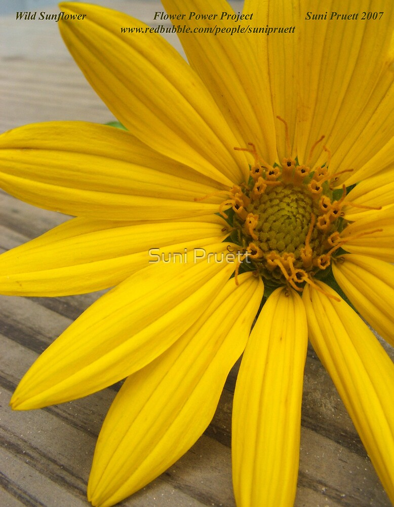 Wild Sunflower for Flower Power Project by Suni Pruett