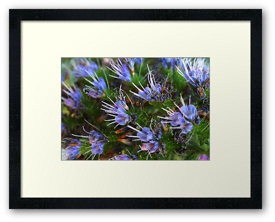 Blue Flowers by Ben de Putron