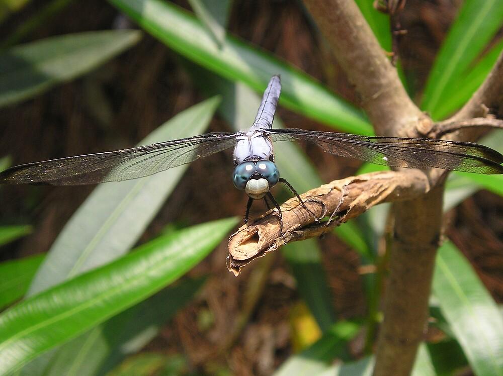 Dragonfly Homer1 by adrianmole
