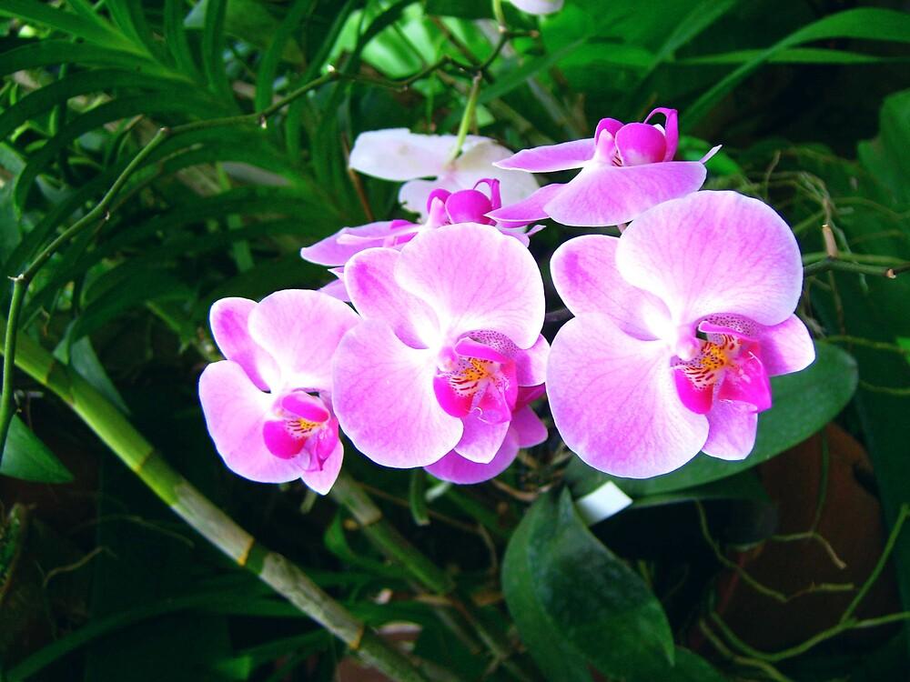 orchid0 by Devika Fernando
