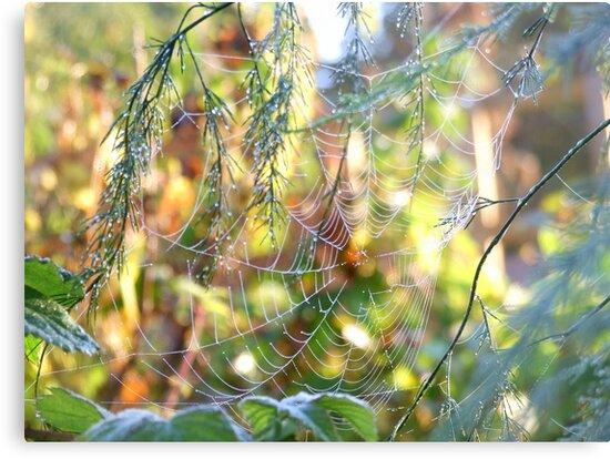 Morning Dew by Pauline Jones