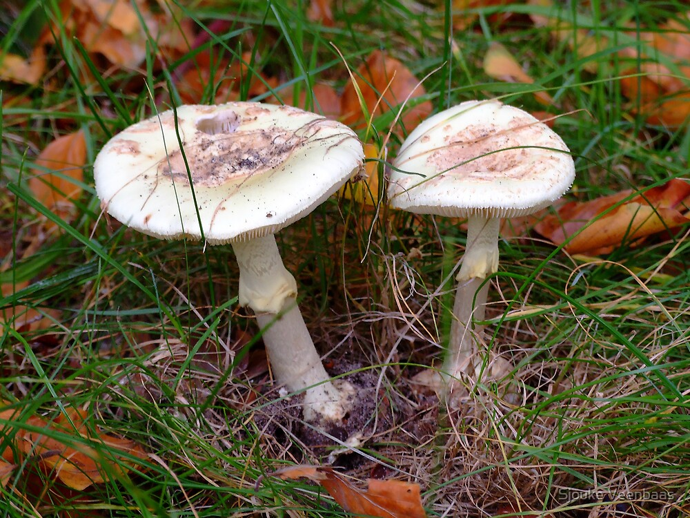 Mushrooms in Autumn leaves by Sjouke Veenbaas