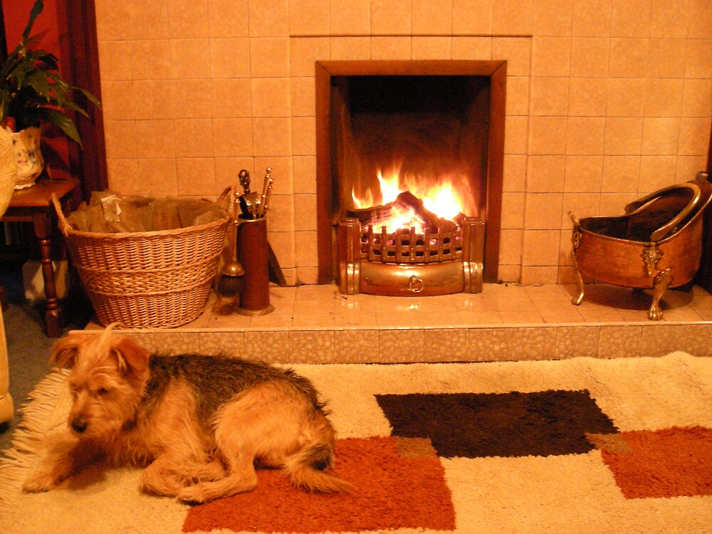 Sammy by the fire by Kevin Shannon