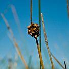Long Grass by Jason Fitzsimmons