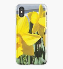Daffodils iPhone Case/Skin
