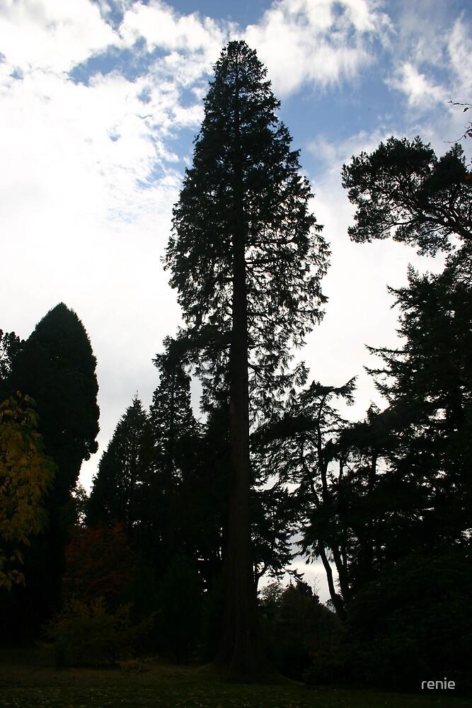tall tree by renie