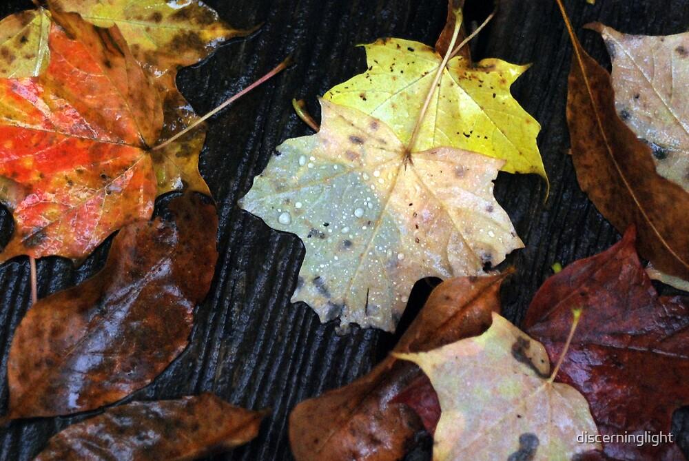 Rain on Leaves by discerninglight