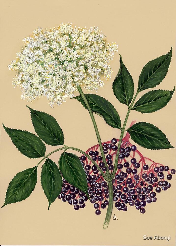 Elderberry - Sambucus nigra by Sue Abonyi