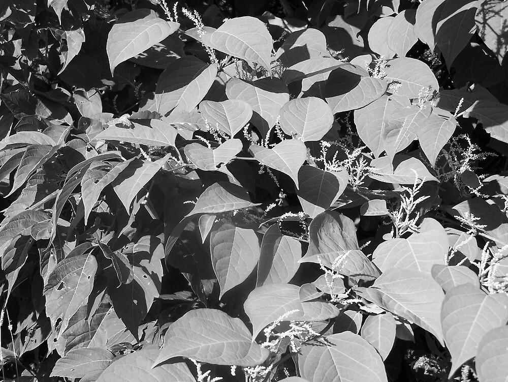 Summer Leaves by Gene Cyr