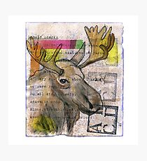 See the Luvli Moose Photographic Print