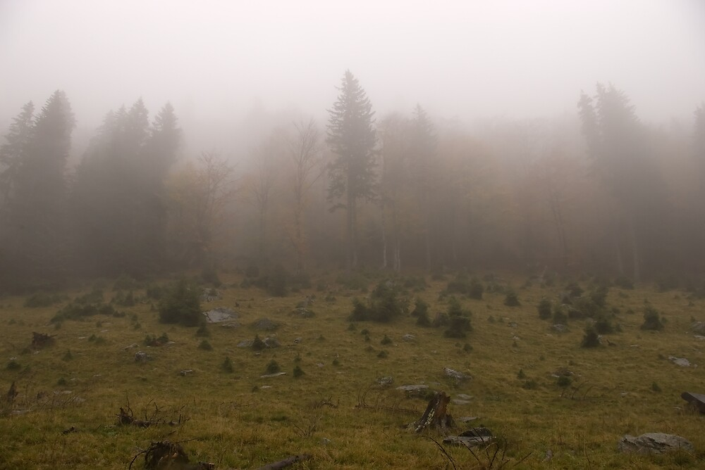 Foggy forest by ictin