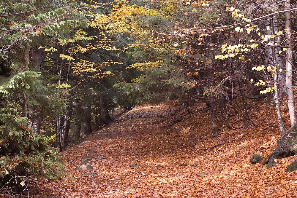 Mountain path by ictin