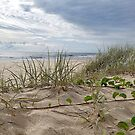 Grass Sand and Surf by Kathie Nichols