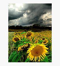 August Rains Photographic Print