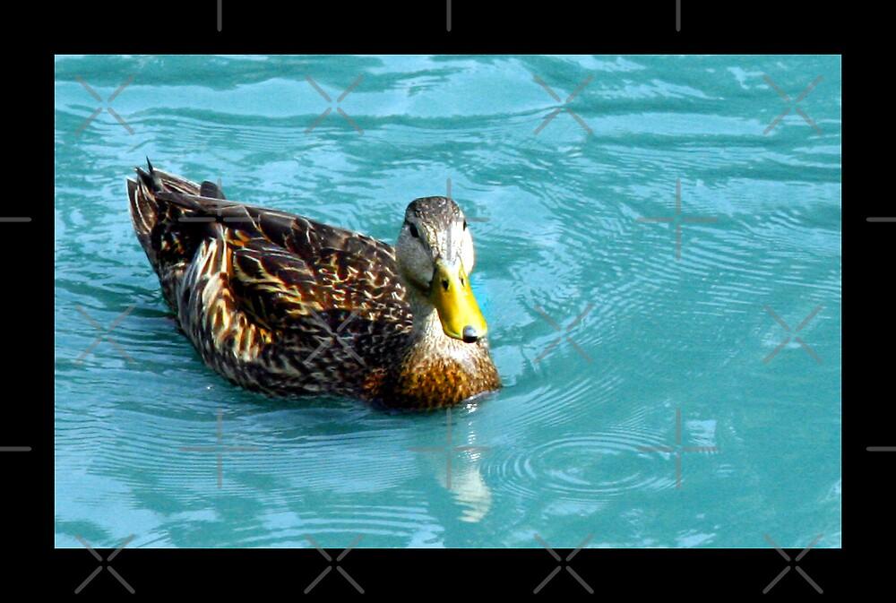 Blue Duck by ImagineByLisa