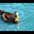 Blue Duck by Lisa Hildwine