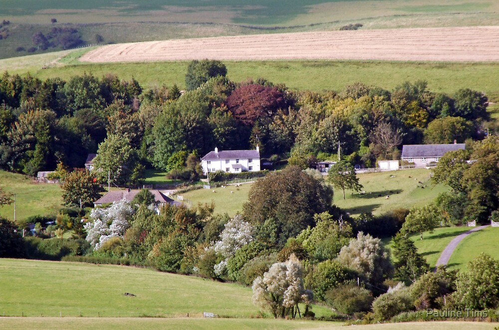August in Eggardon  Dorset UK by Pauline Tims