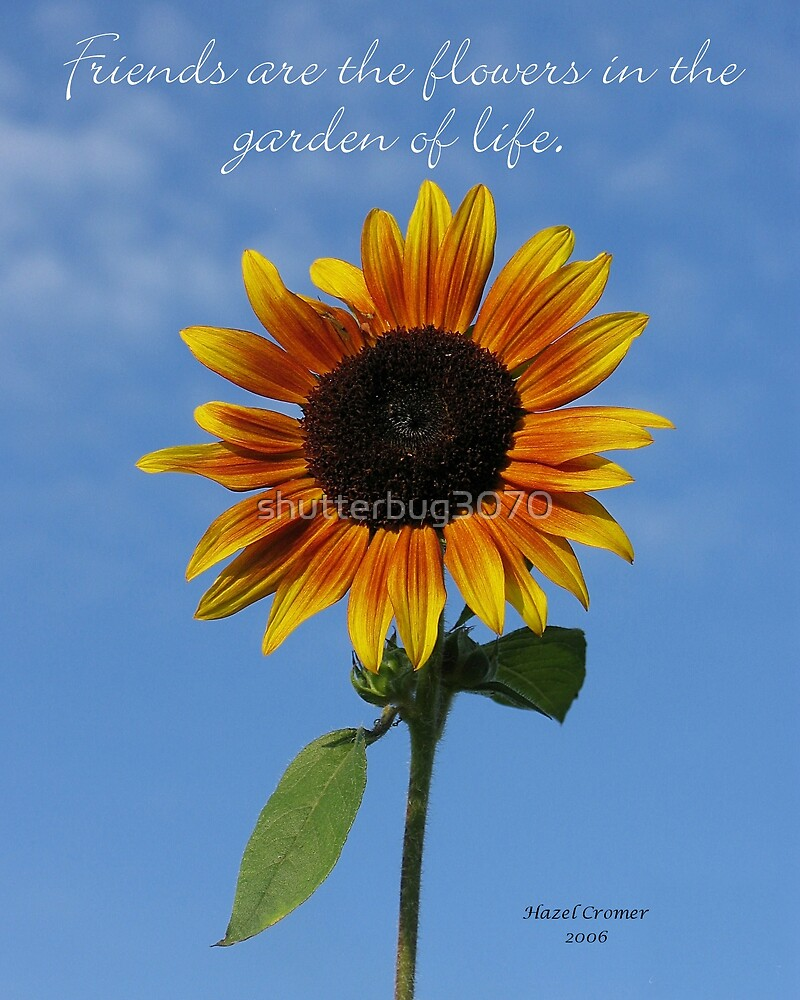 Friends....Sunflower by shutterbug3070