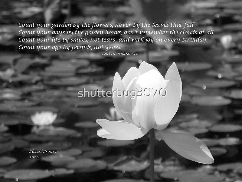 Friend....Lotus by shutterbug3070