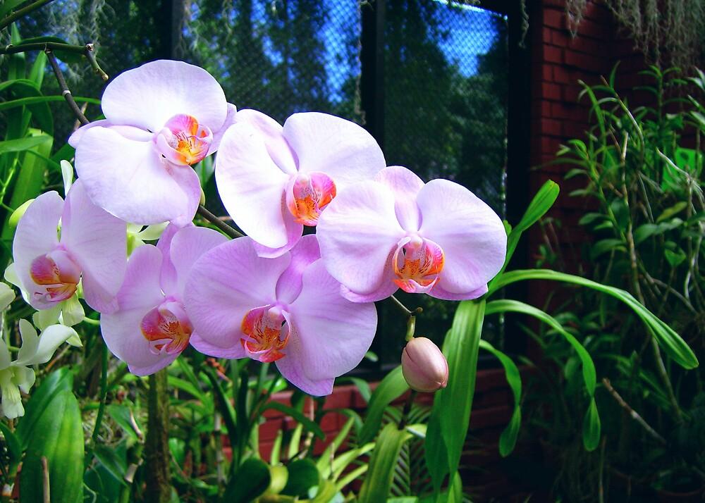 orchid by Devika Fernando